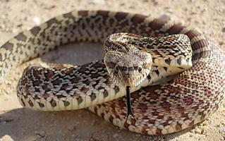 School of Snakes