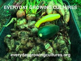 Everyday Growing Cultures: public event + films