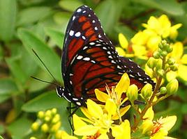 UF/IFAS Extension: Bugs and Butterflies of Brooker...