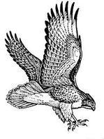 Family Wildlife Series Part IV: Birds of Prey