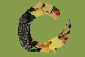 August Eco-Arts Salon: Rebecca Chunn