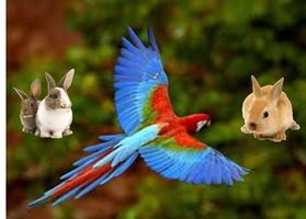 When they Hop and Fly - Caring For Rabbits and Birds...