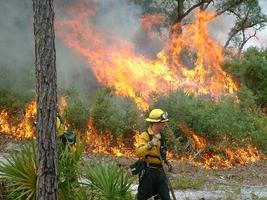 CFPFC Field Trip: Restoration with Fire at Tiger Creek...