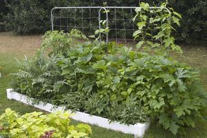 FREE Gardening Workshop