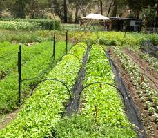 Intro to Organic Market Gardening