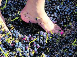October Grape Stomping Festival