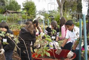 Whole Foods Market-HIL School Garden Clean Up (Kids'...