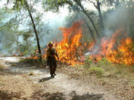 CFPFC Field Trip: Restoration with Fire at Tiger Creek...