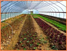 Vegetable Crop Planning Using Technology & Common Sense