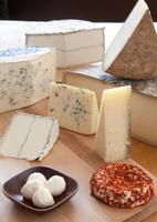 Discover our Cheeses
