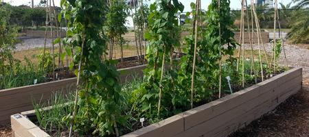 Preparing For Your Fall Vegetable Garden