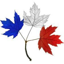 Aide à l'Intégration des Nouveaux Arrivants Francophones (AINAF) logo
