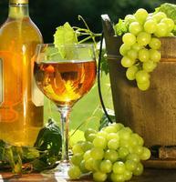 Escape Norm Wine Tasting
