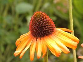 State Master Gardener Field Day