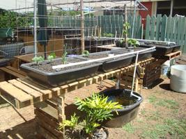 Aquaponic Garden TOUR in Aina Haina