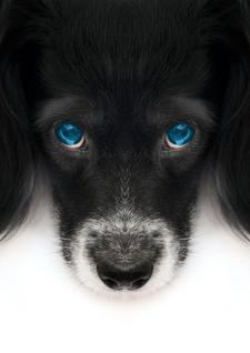 Lori Spagna, efil's god, efil's god Dog Training, efil's god Spirit logo