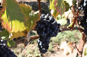 Food and Agribusiness Wine Field Trip