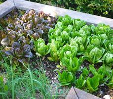 Serious Backyard Veggies 1