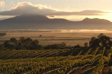 Montara Winery logo