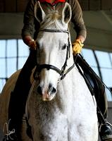 Autumn Clinic with Stephanie Mosely
