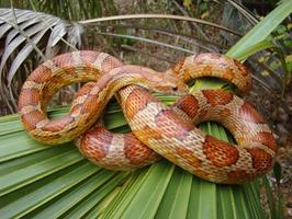 Florida's Fascinating Snakes