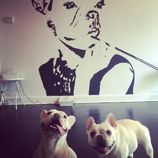 SIT Social: A Dog Lounge Events  logo