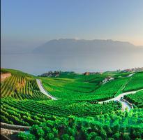 9 Amazing Swiss Wines