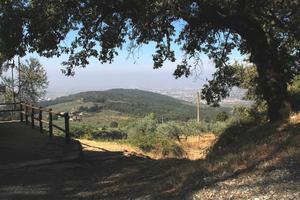 Pittura a Monte Morello