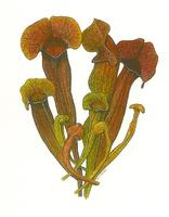 BOTANICAL ILLUSTRATION - autumn term