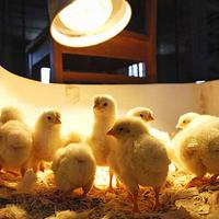 Poultry Research Lab Tour