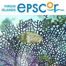 VI-EPSCoR logo