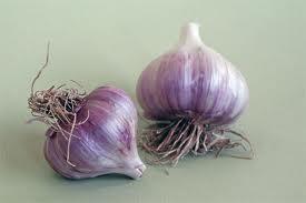 Garlic Planting Workshop