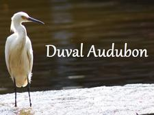 Duval Audubon Society logo
