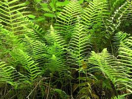 UF/IFAS Extension: Explore the Ferns of Brooker Creek...