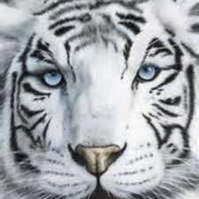 White Tigress Productions logo