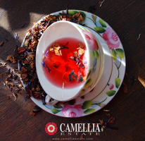 Camellia Estate Tea Tasting