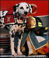Firefighter Dayna & Molly the Fire Safety Dog @ Aurora...