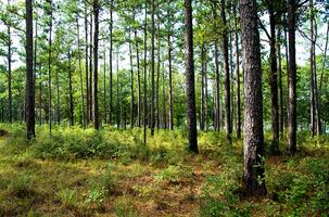 Alabama's Forest Action Plan
