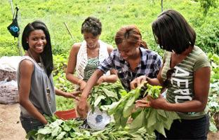 Foodtober Community Service: Farming in Brooklyn