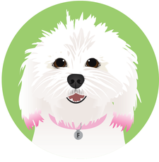 Fluffy and Spike's Small Dog Daycare logo
