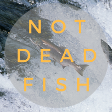 notdeadfish  logo
