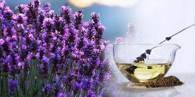 Essential Oils for Joint & Muscle Pain, Sleep and...