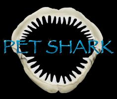Pet Shark Master Class, Guitar Program Social and...