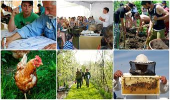 Certificat en design de permaculture - PDC+ 2017