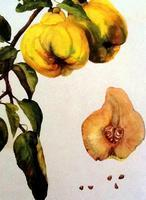 Beginning Watercolor Techniques for Botanical...