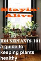 Stayin' Alive! (Healthy Houseplants 101)