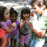 Art and Tinkering (ages 3-5): Nature