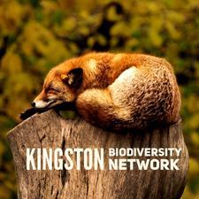 Kingston Biodiversity Network  logo