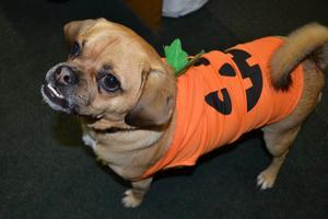 Seaport's Howl-o-ween Costume Party 2013!