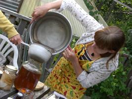 Ginger beer & Wild herbal sodas
